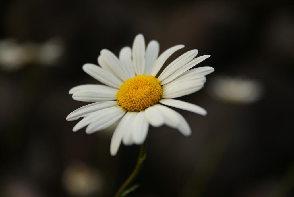 なんか白い花