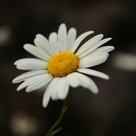 SONY DSLR-A200で撮影した植物(なんか白い花)の写真(画像)