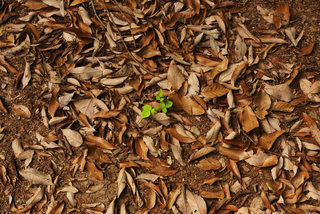 枯葉の中からこんにちは。