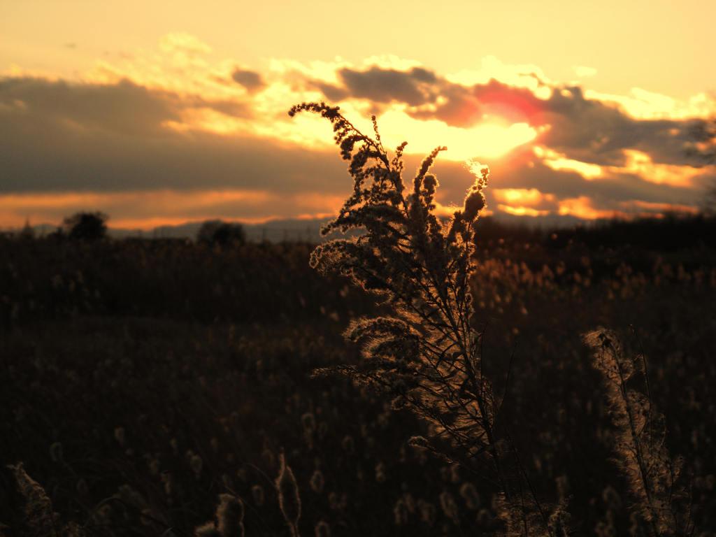 田舎夕暮れ