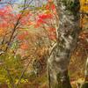 下山路の紅葉