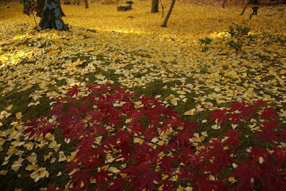 落黄と紅葉