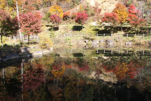 水鏡に映る紅葉