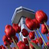冬咲きチューリップと展望タワー