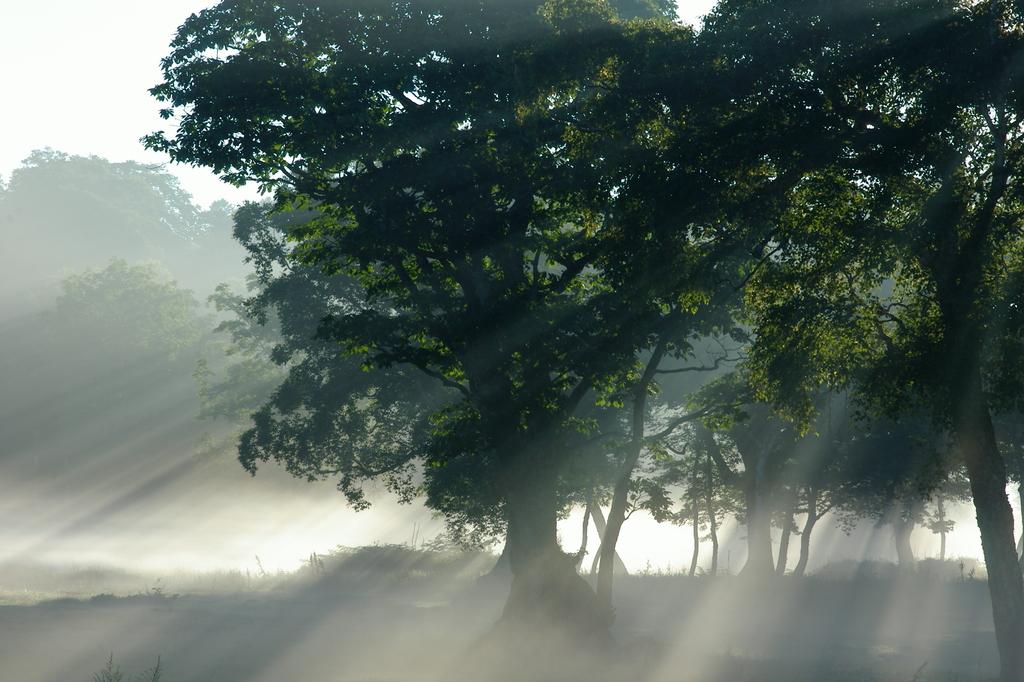 カヤノ平の朝靄