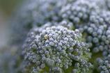 霜化粧-ブロッコリー