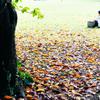 私の秋時間