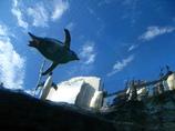 ペンギン空を飛ぶ?