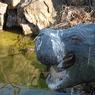 NIKON NIKON D40で撮影した人物(カバもどき)の写真(画像)