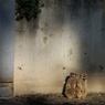 NIKON NIKON D40で撮影した動物(日向ぼっこ)の写真(画像)