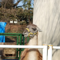NIKON NIKON D40で撮影した動物(笑顔が一番)の写真(画像)