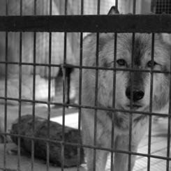 NIKON NIKON D40で撮影した動物(何も言えない)の写真(画像)
