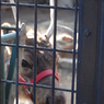 NIKON NIKON D40で撮影した動物(檻とトナカイ)の写真(画像)