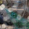 NIKON NIKON D40で撮影した動物(色彩)の写真(画像)