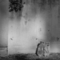 NIKON NIKON D40で撮影した動物(哀愁)の写真(画像)