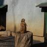 NIKON NIKON D40で撮影した動物(大抜擢!監視役。)の写真(画像)