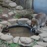 NIKON NIKON D40で撮影した動物(風邪をひかないために大事なこと)の写真(画像)