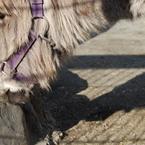 NIKON NIKON D40で撮影した動物(ロバ接近)の写真(画像)