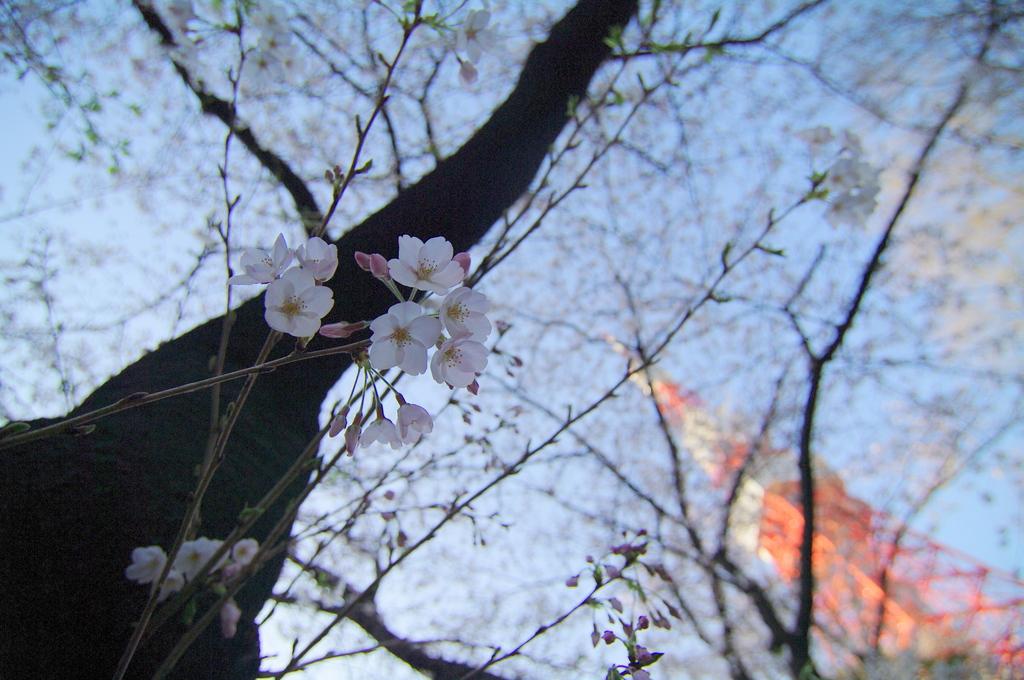 春・東京タワー