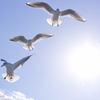 Photogenic Seagulls