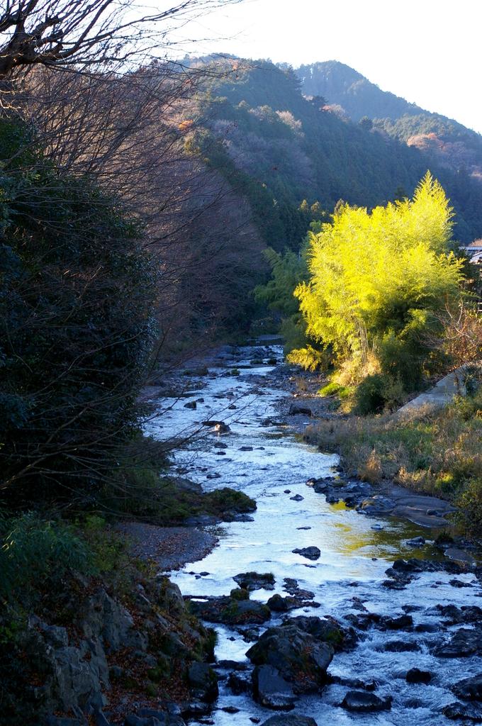 冬の高麗川