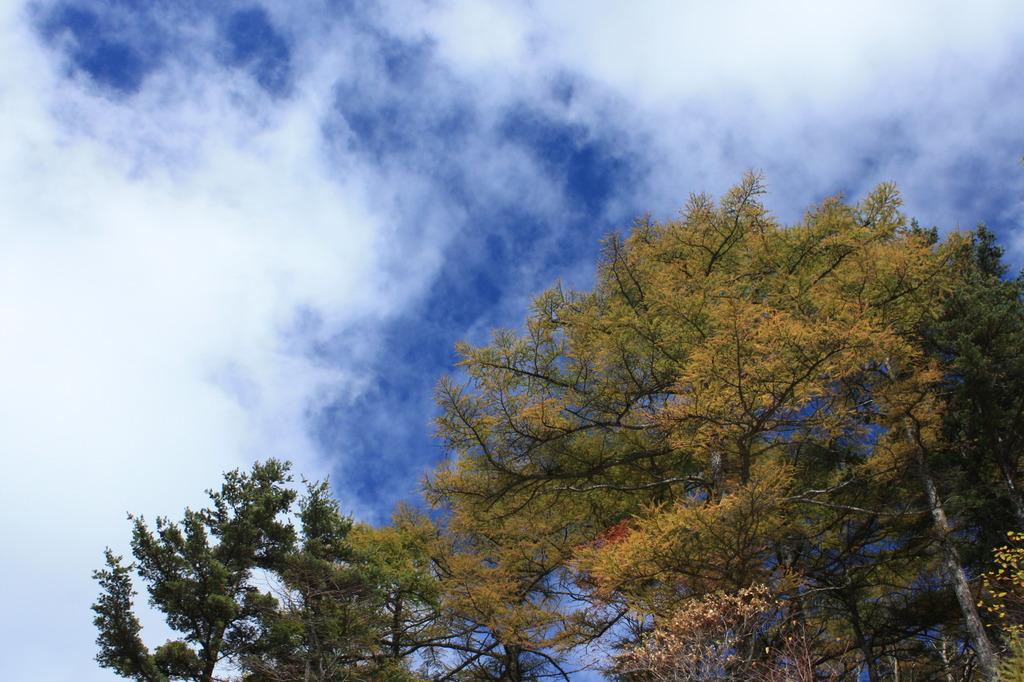 高峰高原の黄葉と青空