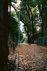 晩秋の家路