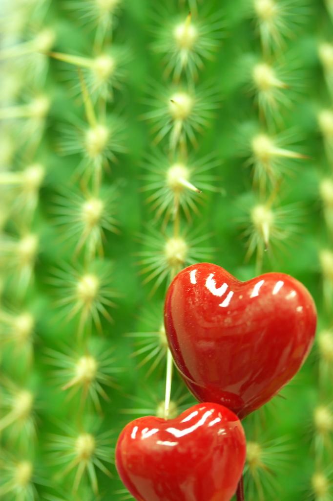 Cactus Illumination