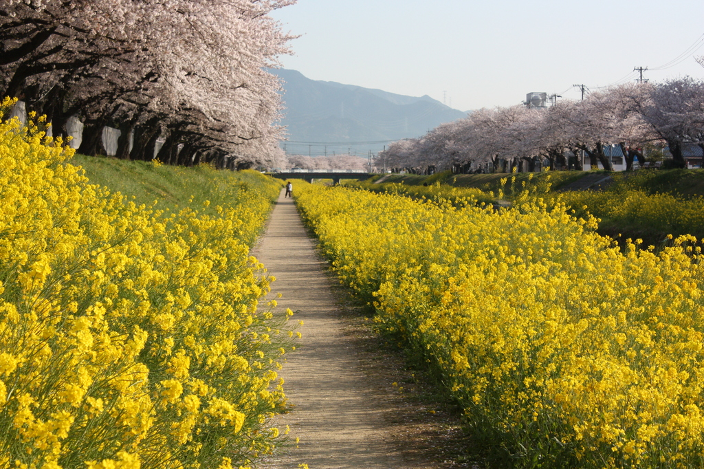 spring bloomer...