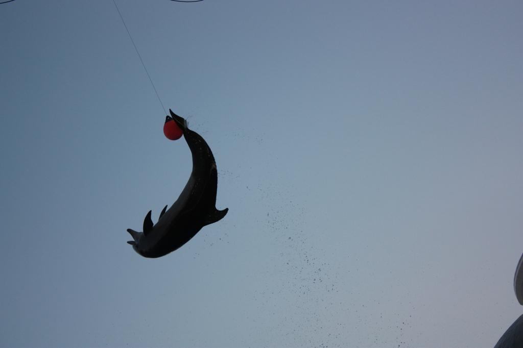 Overhead Kick....