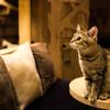 猫カフェ嬢w