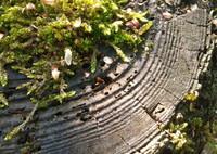 森のバームクーヘン