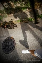 Walk with my Buddy