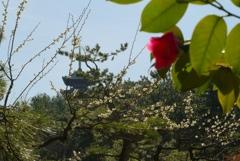 春の三重塔