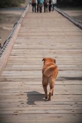 犬も歩けば木津川をわたる