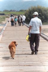 犬と歩けば木津川をわたる