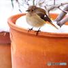 雪の朝の小鳥