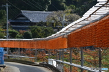 串柿の里四郷1