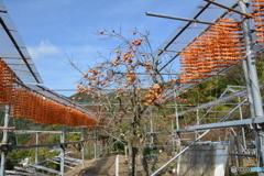 串柿の里四郷4