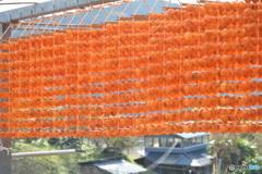 串柿の里四郷2