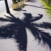 石垣島にて 木陰