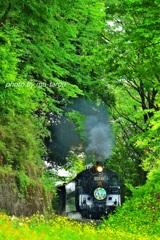 緑の中の蒸機