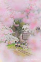 湯野上、桜の驛