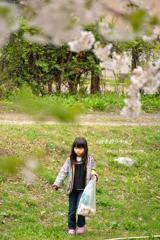 桜を拾う少女