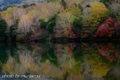 湖面に、秋華開く
