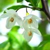 五月の花・2