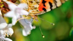 蝶・なりふり構わず