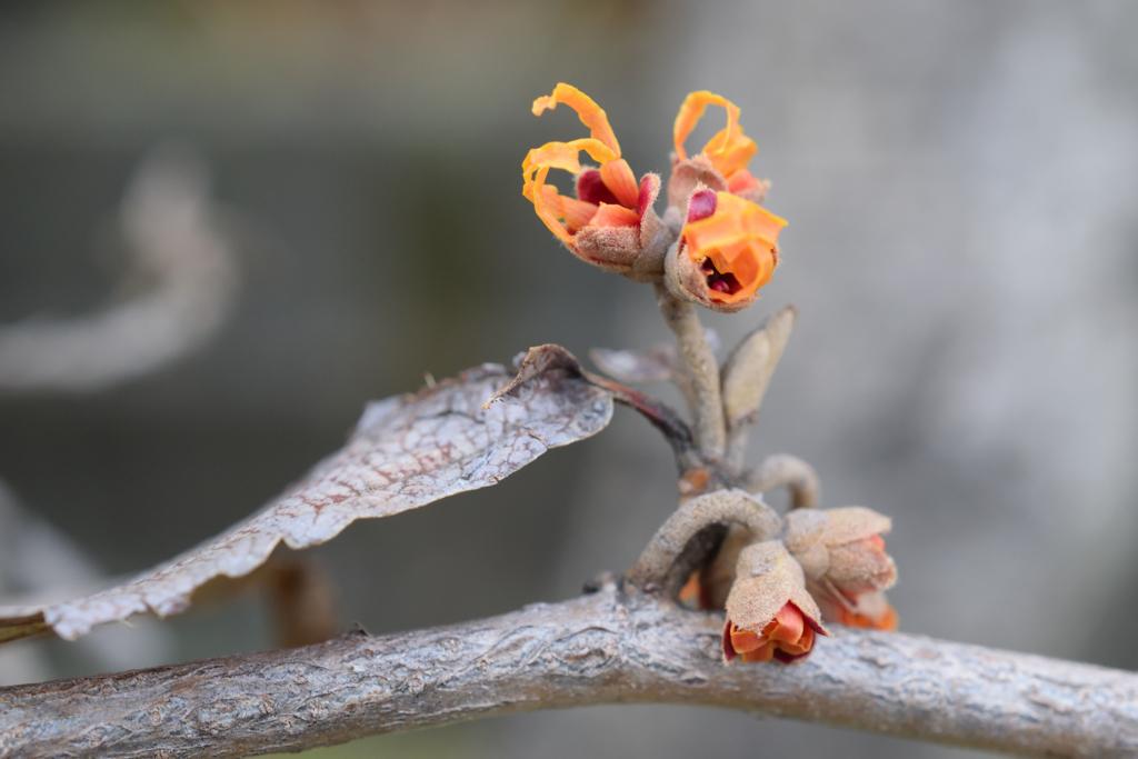 枯木に花が1