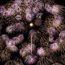 NIKON NIKON 1 J2で撮影した(二尺玉)の写真(画像)