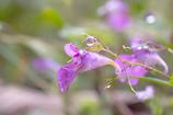 雨に濡れた紫